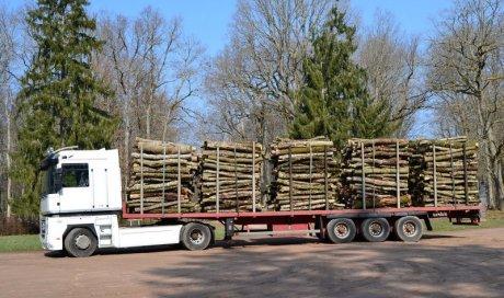 Vente de bois de chêne Ambert