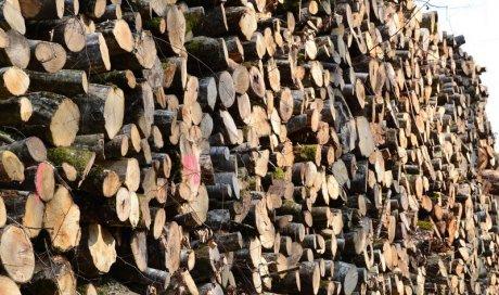 Vente de bois en billons Ambert